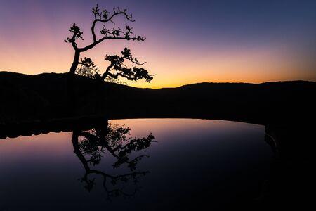 reflexion: reflexión del árbol