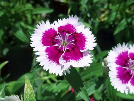 White and purple flower spring Banco de Imagens