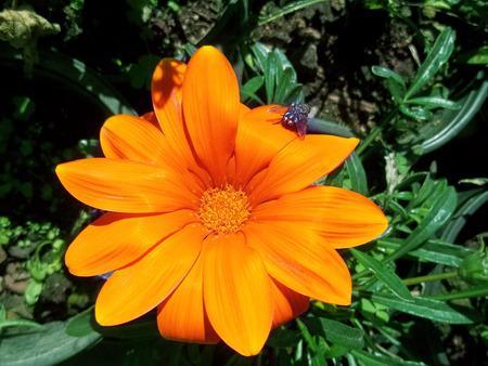 Big orange flower garden Banco de Imagens