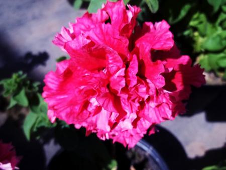 Pink flower contrast Banco de Imagens