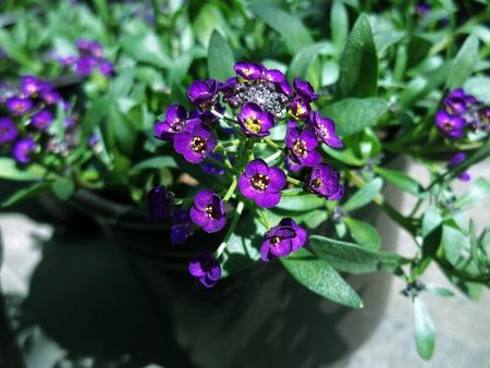 Little purple flowers Banco de Imagens - 101674540