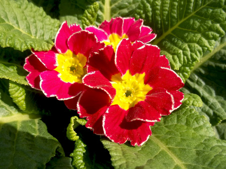 Red and yellow flowers Banco de Imagens