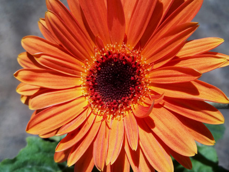 Big orange flower Banco de Imagens