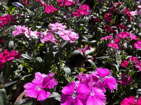 Pink flowers spring Banco de Imagens - 101446054