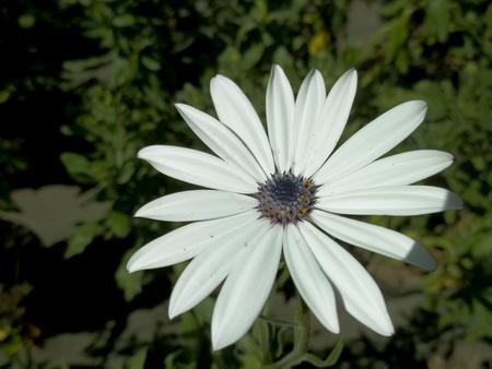Big white flowers Banco de Imagens - 101446057