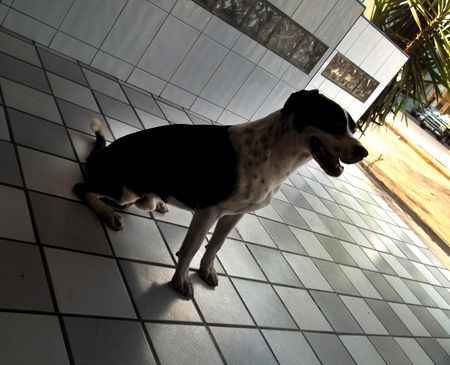 Friendly and thoughful dog Banco de Imagens
