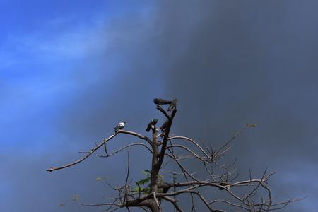 Contaminated sky Banco de Imagens - 103045184