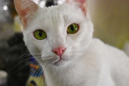Cat with Green eyes watching you Banco de Imagens - 103037094