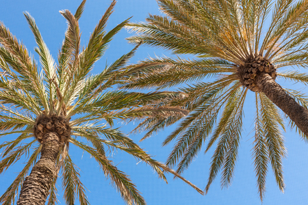 Palm bomen op het strand Stockfoto