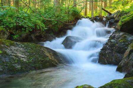 Watervallen in het bos Stockfoto