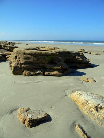 coquina: Rock de coquina cubierto de algas a lo largo de una playa de Florida.