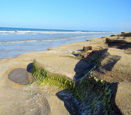 coquina: Las algas cubiertas coquina rocas a lo largo de una playa de arena.  Foto de archivo