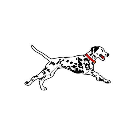 dalmatian dog run vector illustration for your company or brand