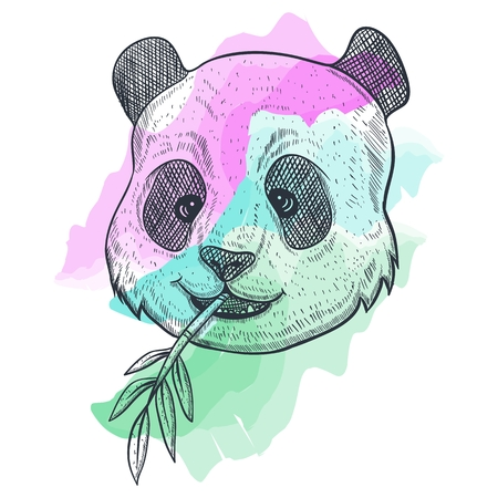 panda BAMBOO watercolor vector illustration Illustration