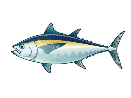 Tuna Blackfin Vector design Illustration