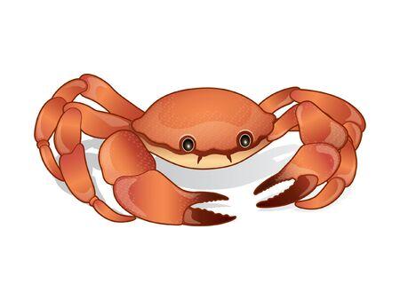 Crab vector design realistic illustration
