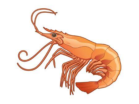 Illustration réaliste de conception de vecteur de crevettes