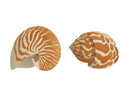 nautilus snail realistic vector illustraion Ilustração