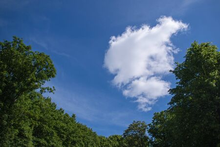 White cloud against the blue sky framed by the crowns of green trees below