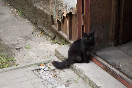 Black cat sitting on the step by the doorway of a shabby brown door of old house at the broken sidewalk