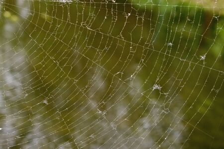 A fragment of a thin white silk web radiating from the upper left corner against the reflection of green trees in the murky greenish water