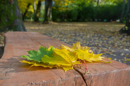 A pile of autumn green and yellow maple and linden leaves lying on a brown cracked wooden bench against a background of blurred shrubs, tree trunks and fallen autumn leaves dotting the gray soil.