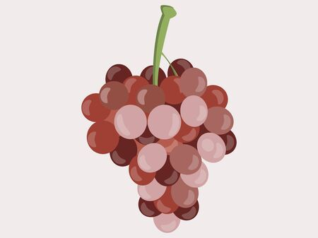 bunches: Grapes. Bunches of grapes. Vector illustration.
