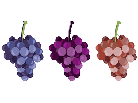 Grape. Bunches of grapes. Set of different grape varieties. Vectores