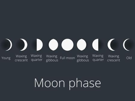 De fasen van de maan. De hele cyclus van nieuwe maan tot volle. Vector illustratie.