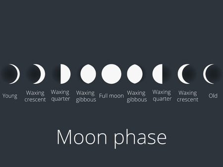 The phases of the moon. The whole cycle from new moon to full. Vector illustration. 向量圖像