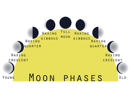 phase: The phases of the moon. Lunar phase. Moon stages. Vector illustration.