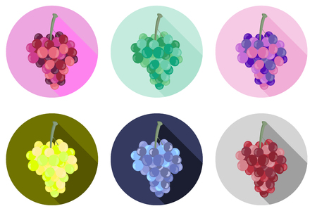 bunches: Grapes icon. Icons isolated on white background. Bunches of grapes. Vector illustration.