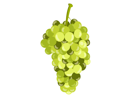 grapes in isolated: Realistic green grapes isolated on white background. Vector illustration.