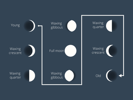 penumbra: The phases of the moon. The whole cycle from new moon to full. Vector illustration. Illustration