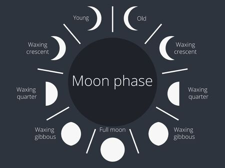 Moon phases. The whole cycle from the new moon to the full. Vector illustration