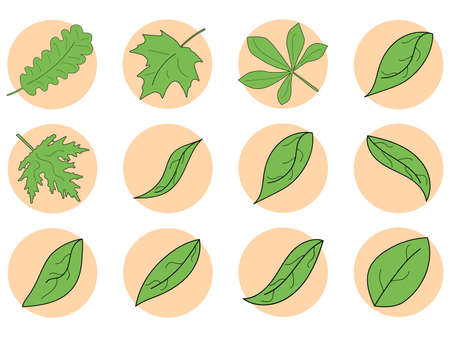 Green leaves icon set. Maple, oak and chestnut leaf contour in a circle isolated on white background. Vector illustration