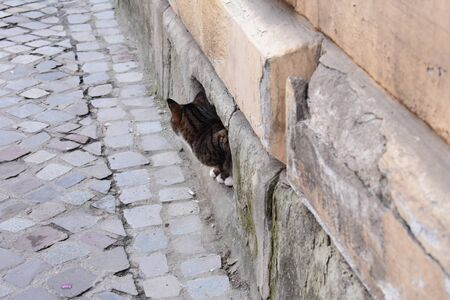 Cat looking away hiding in a building outside in streets of Brasov