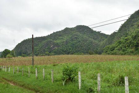 Green landscape along the road in VInales Cuba