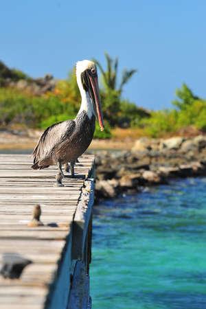 Pelican sat on the pier Stock Photo