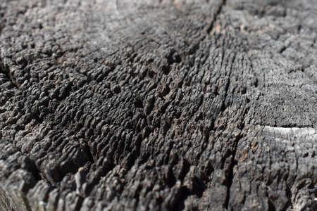 Texture timber post