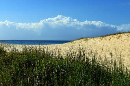 Grass and sand dune beach scene Stock Photo