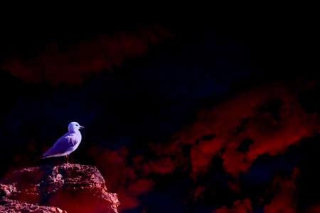 Seagull on a rock with copy space Reklamní fotografie