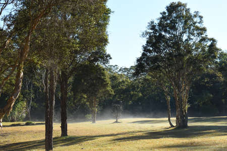 Early morning low lying mist over a rural paddock landscape