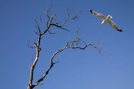 seagull and tree photo