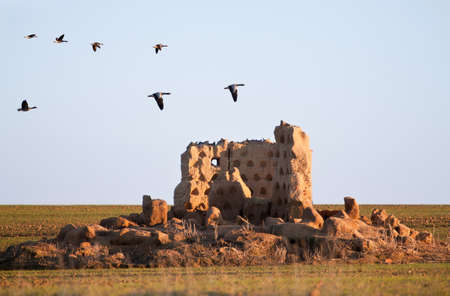 zamora: Flock of geese flying over the ruins of a loft at sunset