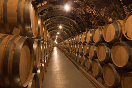 wine barrel: Barrels of wine in cellar Stock Photo