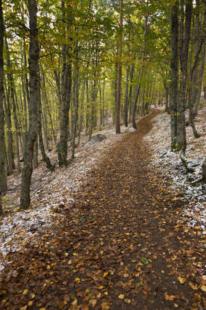 hojas: path of a forest in autumn