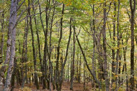 hojas: Forest in autumn