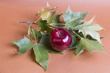 An apple among autumn leaves Stock Photo