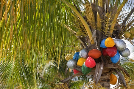 Coconuts painted different colors for the Christmas holiday season. Vacation and travel theme for the hoildays.